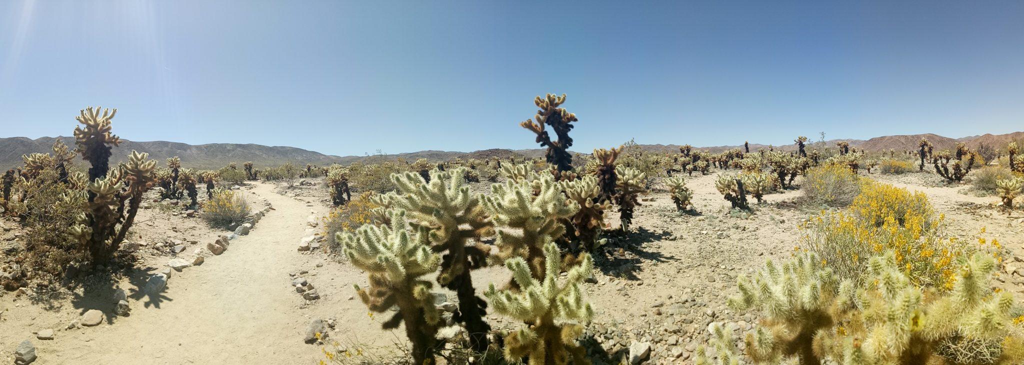 desert diaries joshua tree np