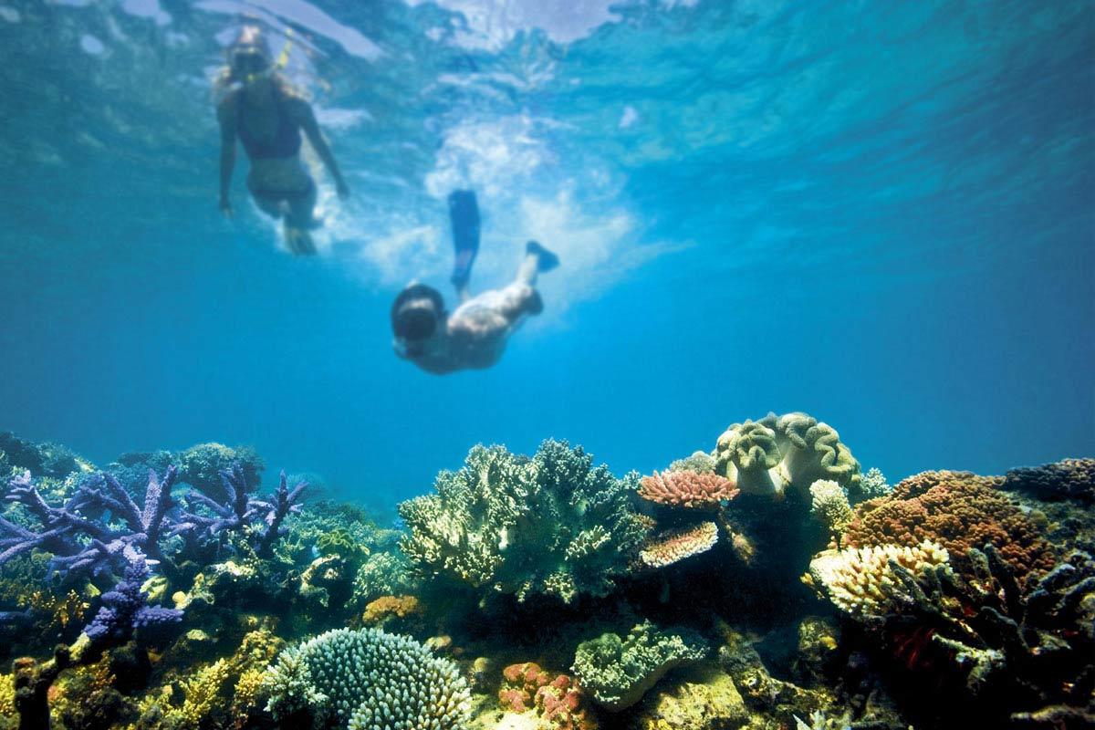 aussie travel down under great barrier reef