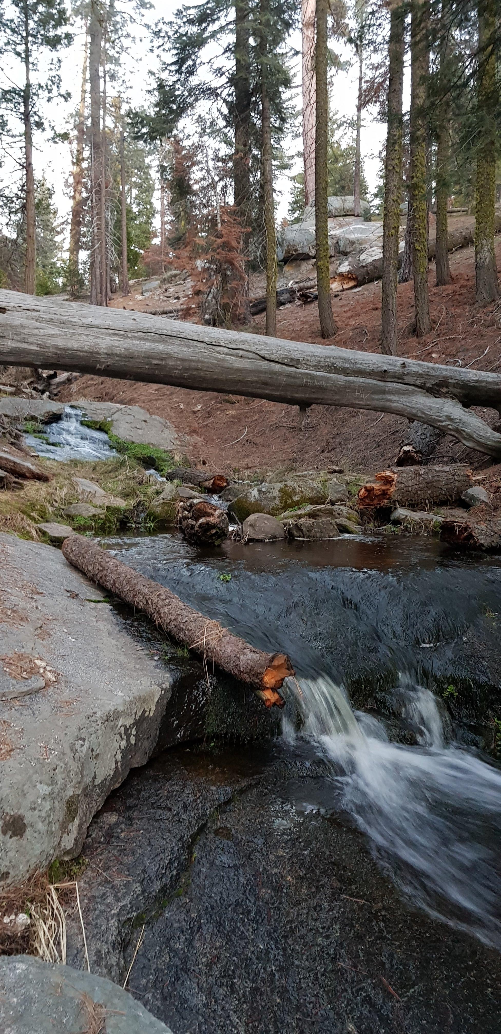 scenic sequoia national park travel vlog blog camp river