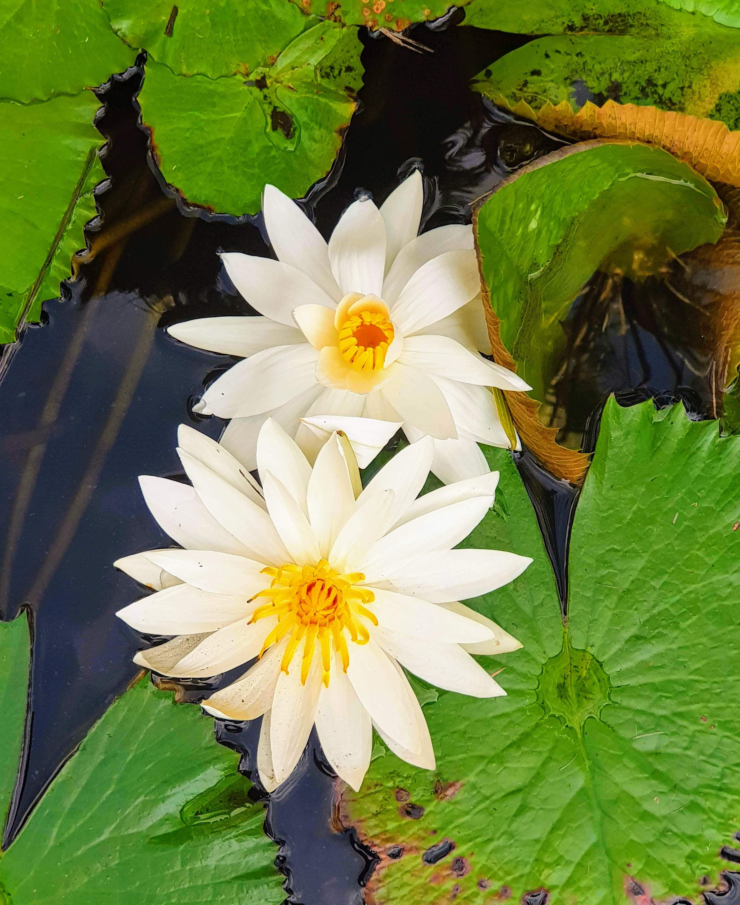 travel light up life business blogger bali lilypad pond culture